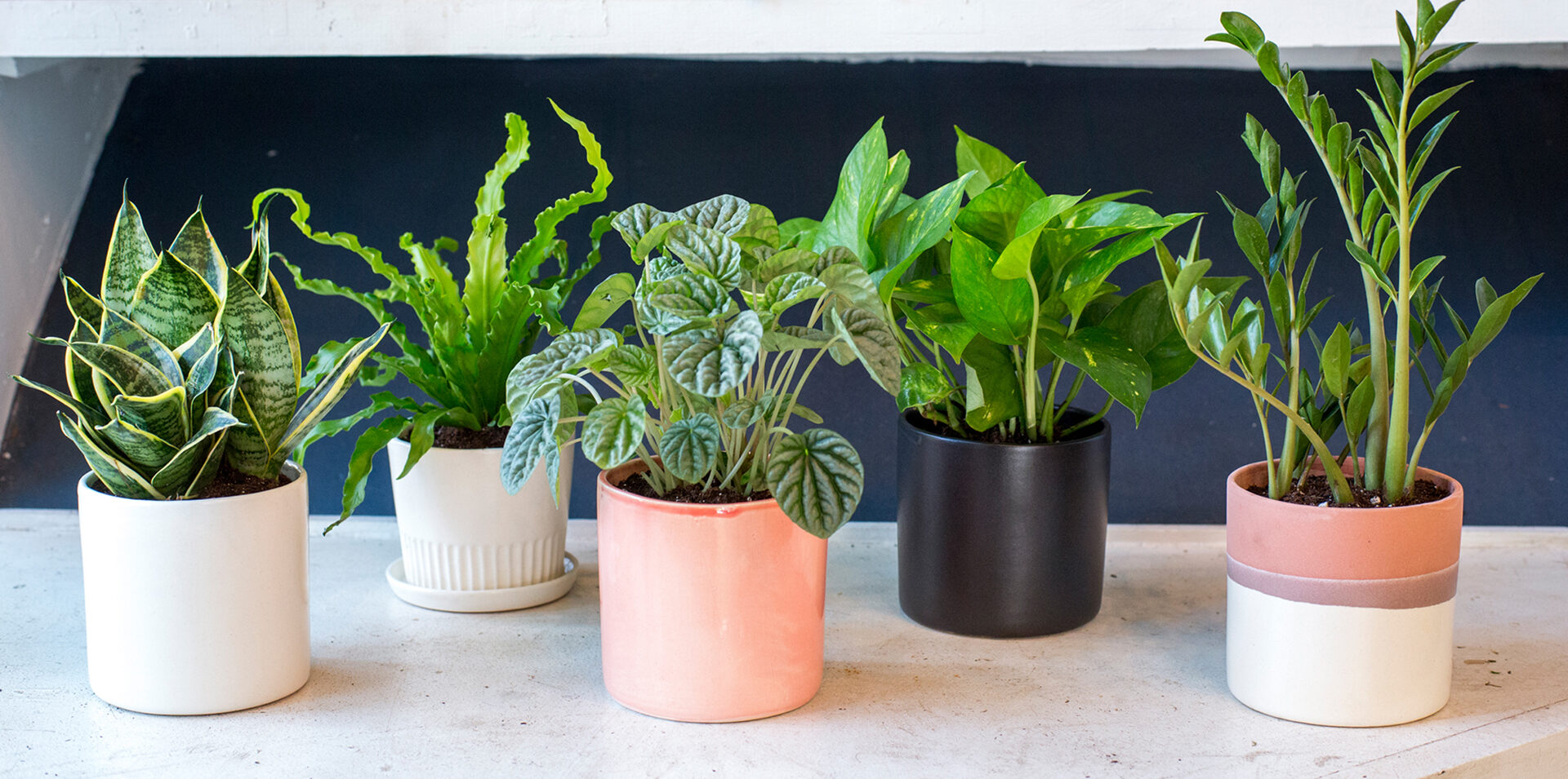 Table Top Plants
